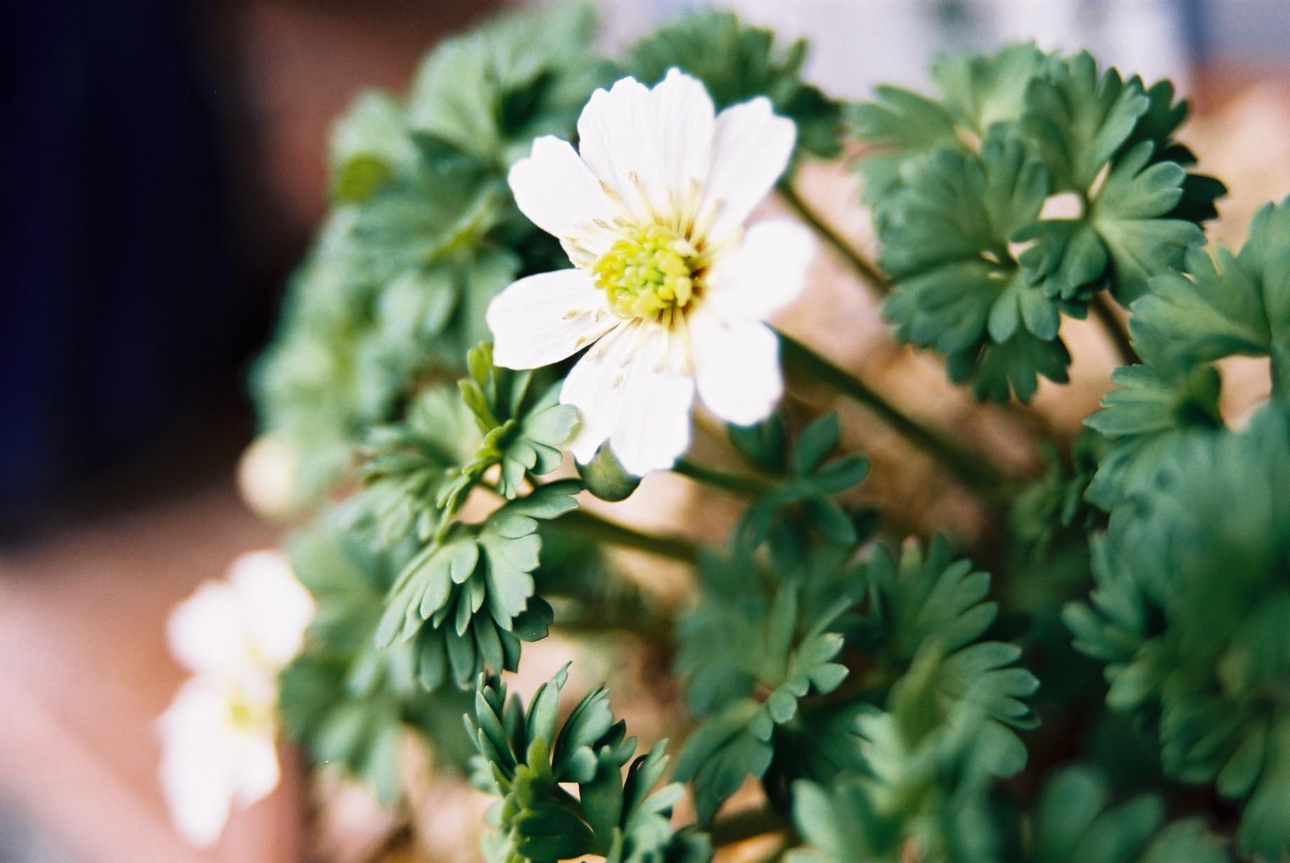 クリスマスイブに…花のギャラリー7_a0103650_16282332.jpg