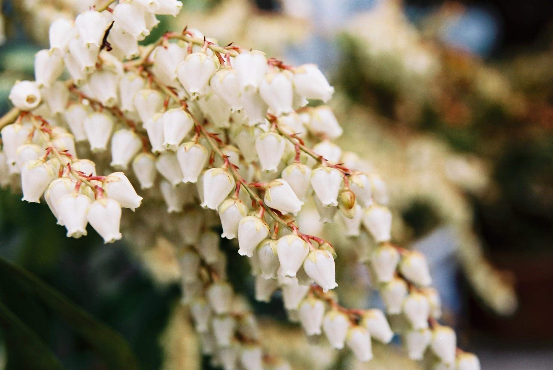 クリスマスイブに…花のギャラリー7_a0103650_1628316.jpg