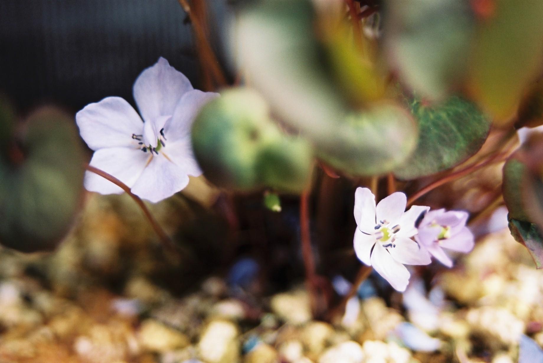 クリスマスイブに…花のギャラリー7_a0103650_16283212.jpg