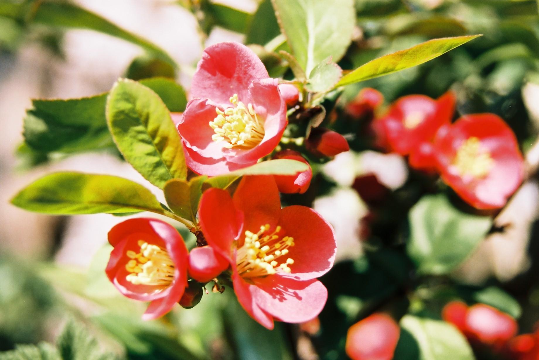 クリスマスイブに…花のギャラリー7_a0103650_16311741.jpg