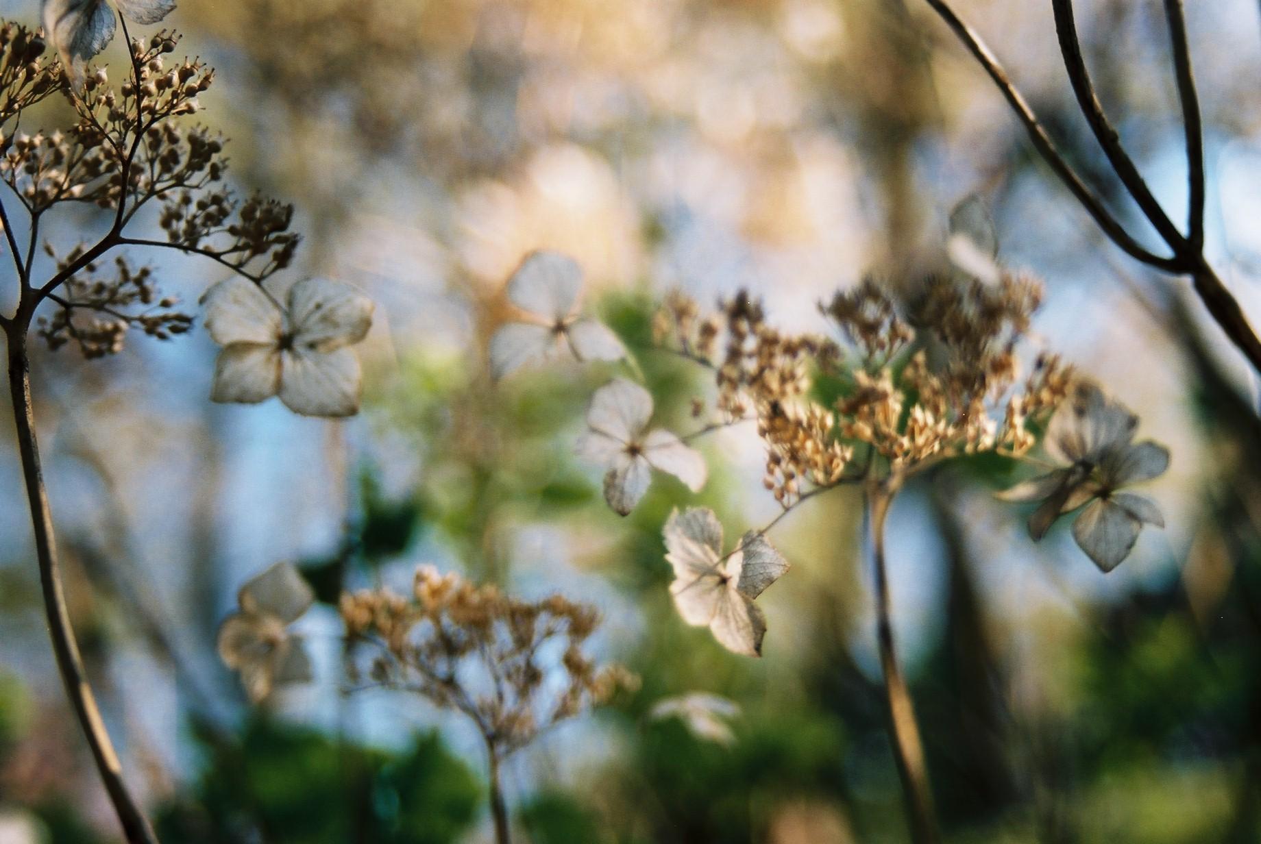 クリスマスイブに…花のギャラリー8_a0103650_16375634.jpg