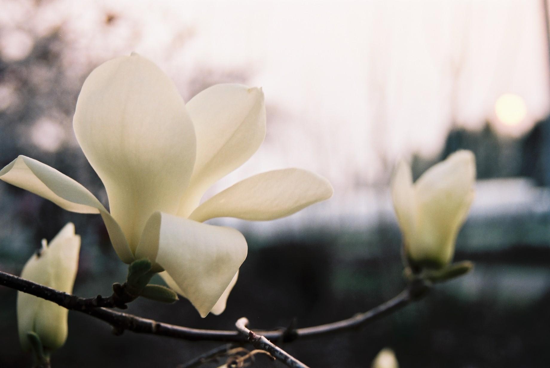 クリスマスイブに…花のギャラリー8_a0103650_16414388.jpg