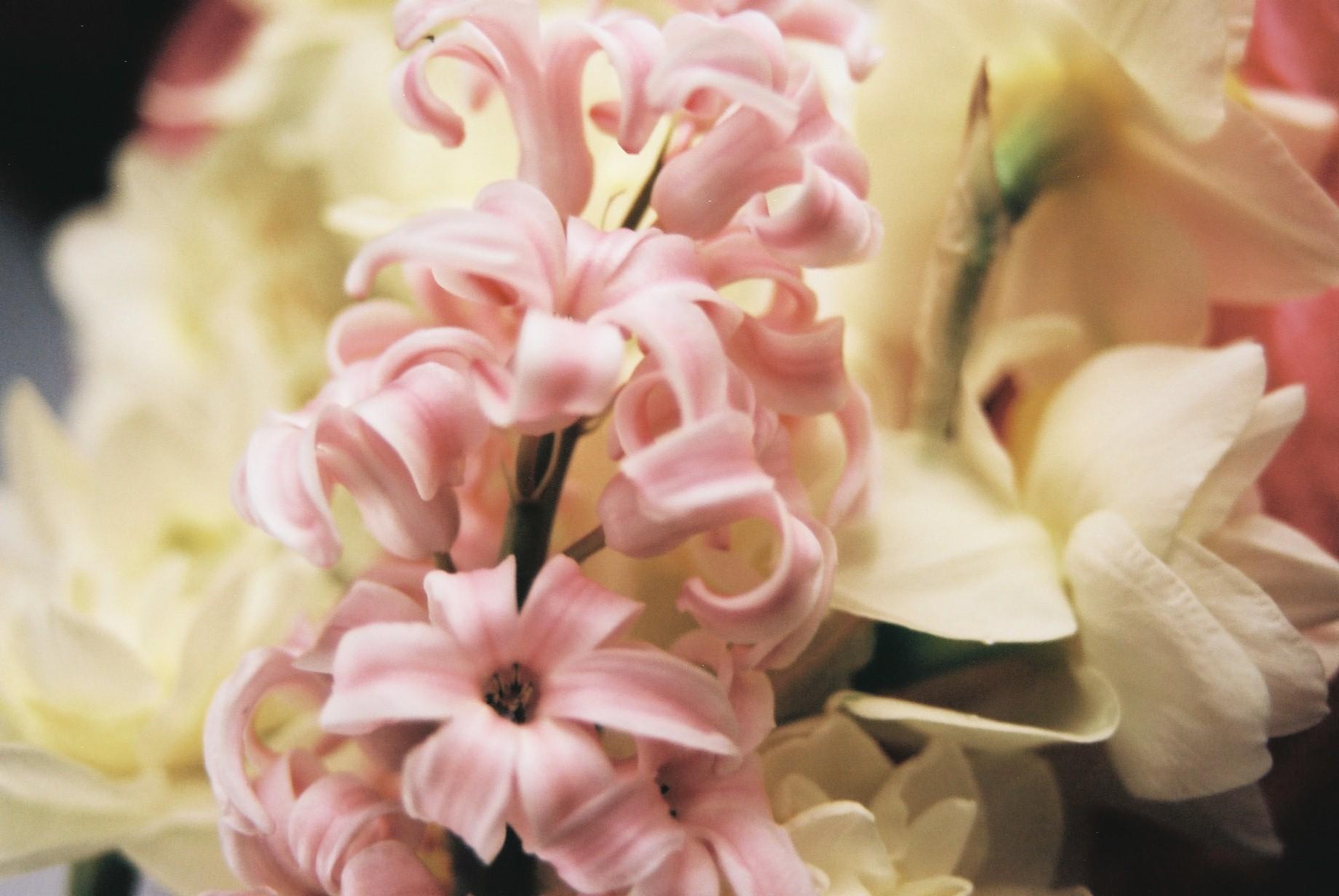 クリスマスイブに…花のギャラリー8_a0103650_16431391.jpg