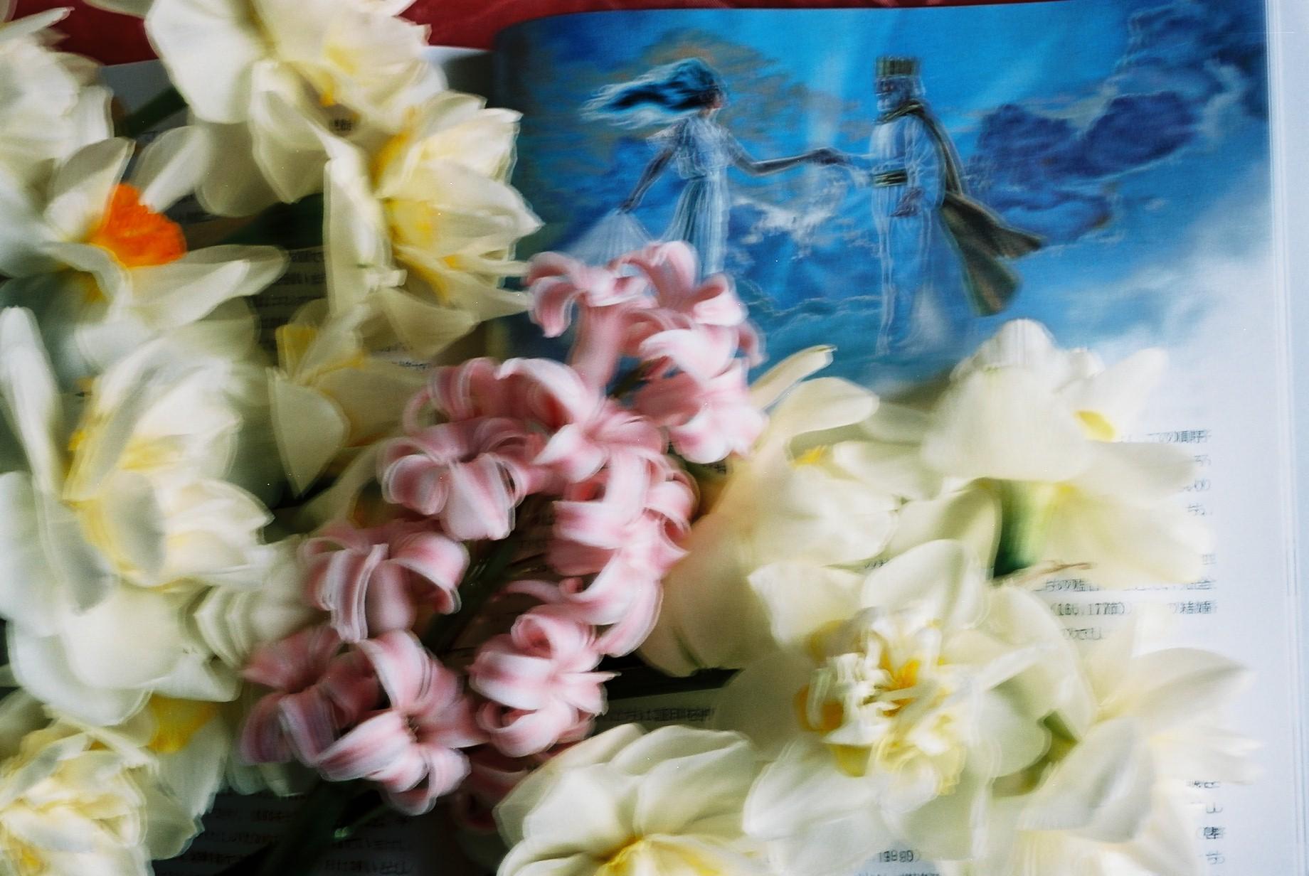 クリスマスイブに…花のギャラリー9_a0103650_16571751.jpg