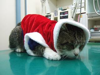 メリークリスマス!!_b0059154_22345252.jpg