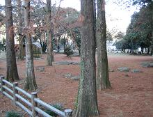 京都女子大 飫肥杉ツアー_f0138874_16232333.jpg
