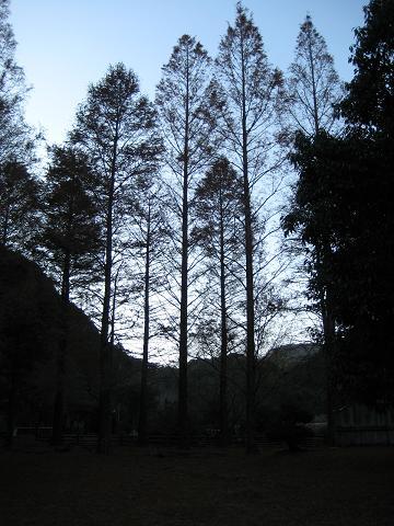 京都女子大 飫肥杉ツアー_f0138874_16245762.jpg