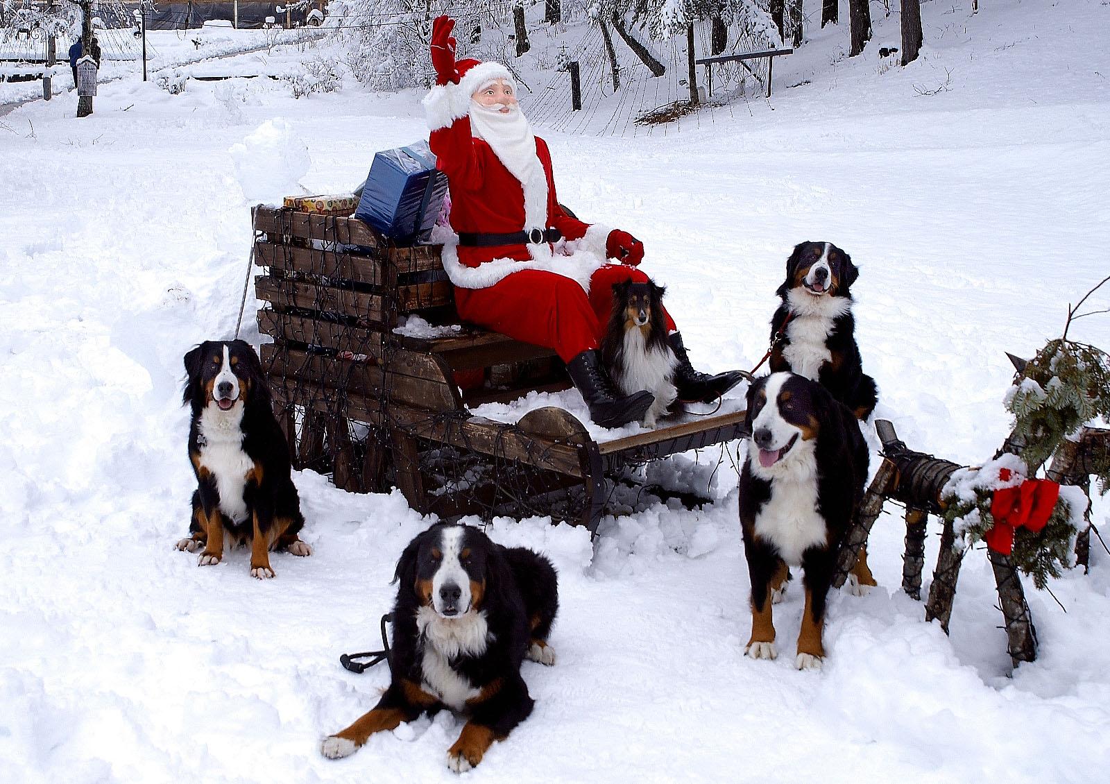 Merry Christmas♪_f0145674_1294629.jpg
