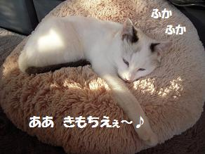 c0139488_1551127.jpg