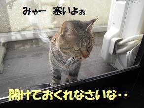 c0139488_1555303.jpg