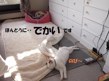 c0139488_1623872.jpg