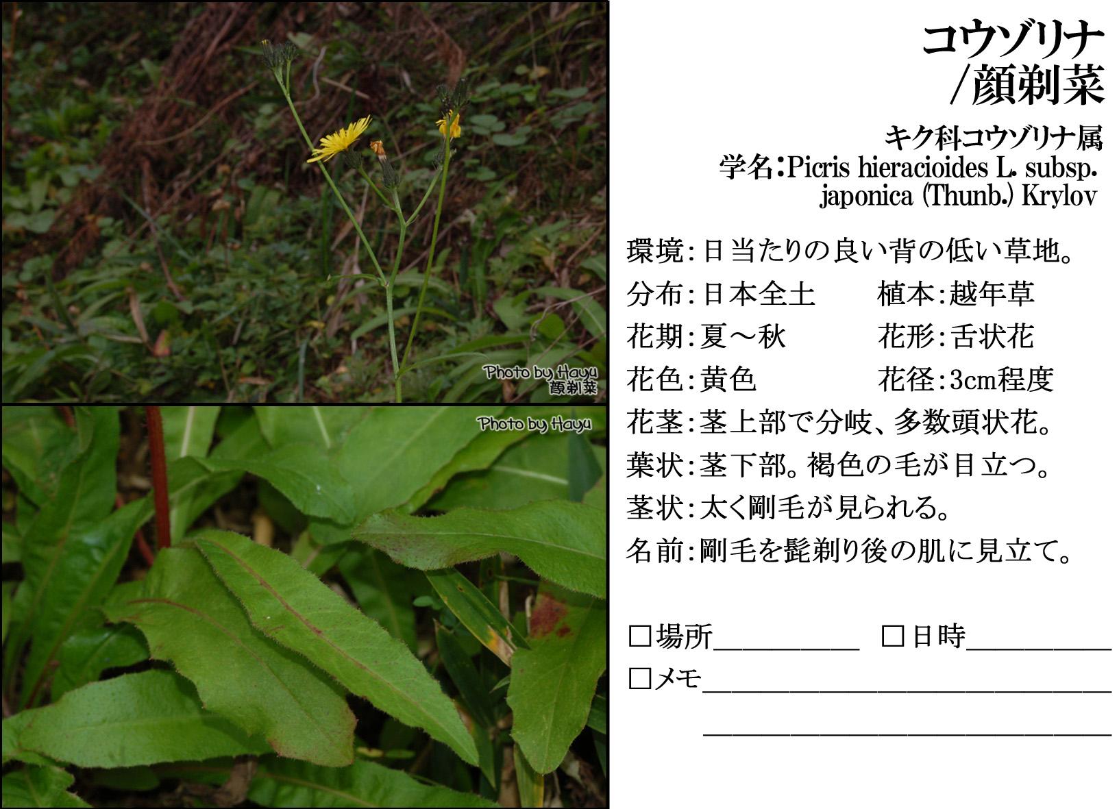 a0059328_201020100.jpg
