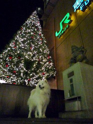 メリークリスマス!_c0062832_16472314.jpg