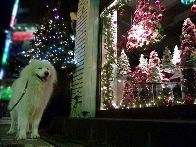 メリークリスマス!_c0062832_16513350.jpg