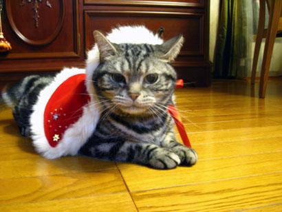 Joyeux Noël _b0054042_18581833.jpg