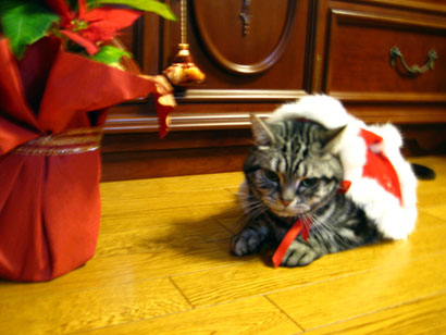 Joyeux Noël _b0054042_1914517.jpg
