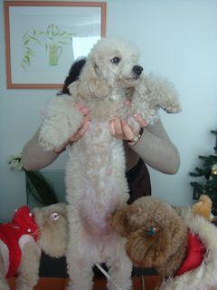 2008.12.25 クリスマス♪_a0083571_17163570.jpg