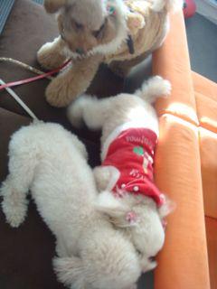 2008.12.25 クリスマス♪_a0083571_171727.jpg