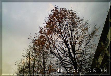 雨・霰そして雷(+_+)_a0053987_22304778.jpg