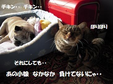 c0139488_1649678.jpg