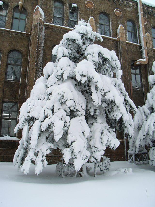 豪雪と寒波_c0025115_1931823.jpg