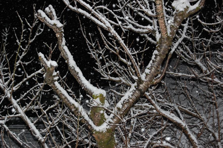 雪・・・・・・・・・・・・・・・_f0053218_6324098.jpg
