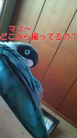 f0126418_1361869.jpg