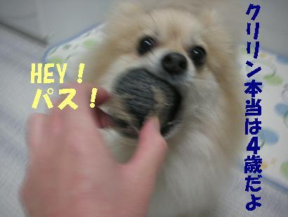 c0179136_1334129.jpg