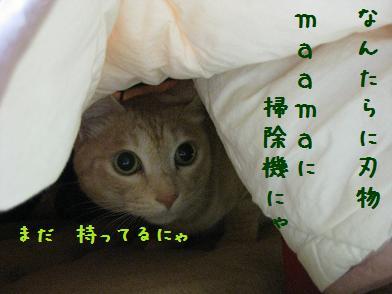 b0151748_1246278.jpg