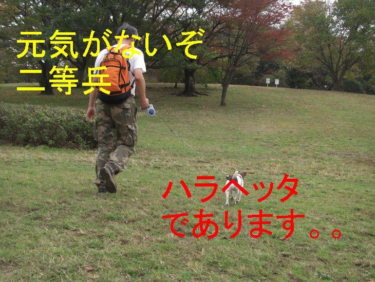 f0053952_1755417.jpg
