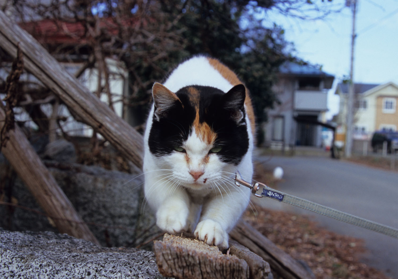 シロ吉くんとミケ子ちゃん_c0181457_637594.jpg