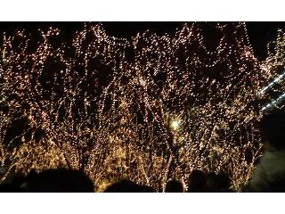 ♪クリスマスがぁ・・・♪_f0177390_14335447.jpg