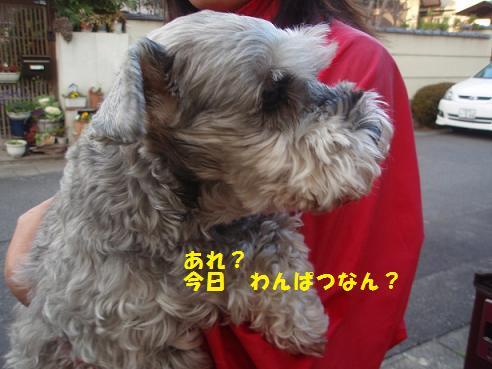 c0098501_1853323.jpg