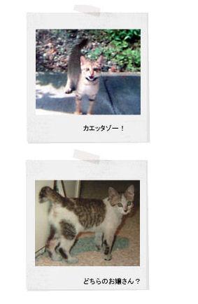 neko  memo  18  /  memory1996~2008_f0177409_1493960.jpg
