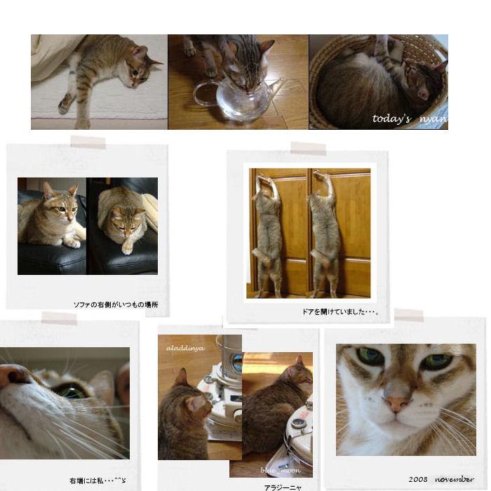 neko  memo  18  /  memory1996~2008_f0177409_1818209.jpg