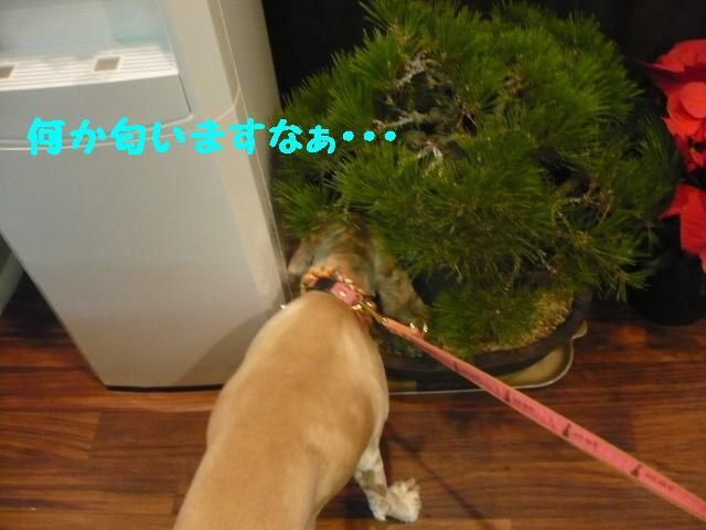 おメメのおっきな... 何か匂いますなぁ..._b0130018_1123146.jpg