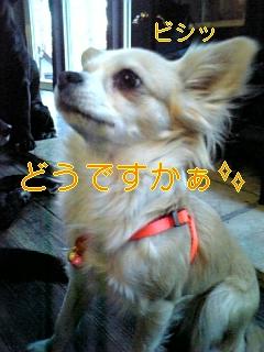 f0148927_18303655.jpg