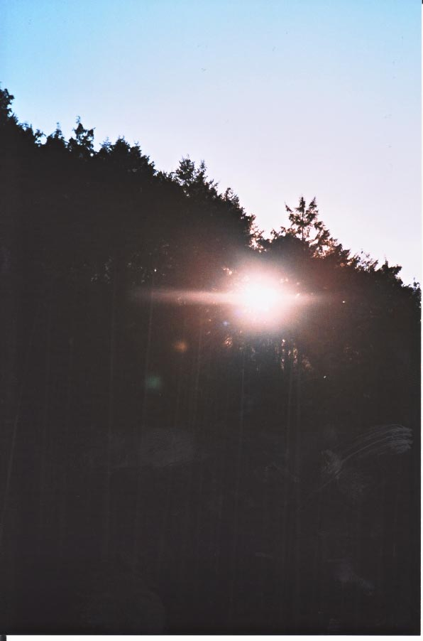 尾鷲の森_e0156251_043434.jpg