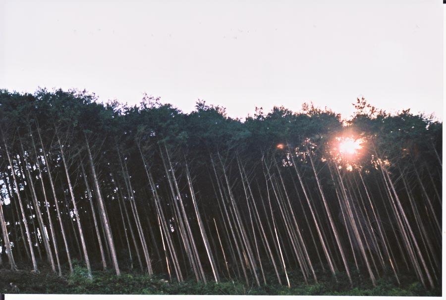 尾鷲の森_e0156251_054562.jpg