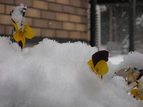 初雪が降りました_b0100062_21114477.jpg