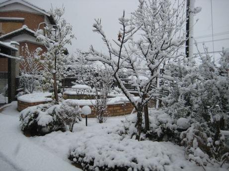 初雪が降りました_b0100062_2193723.jpg