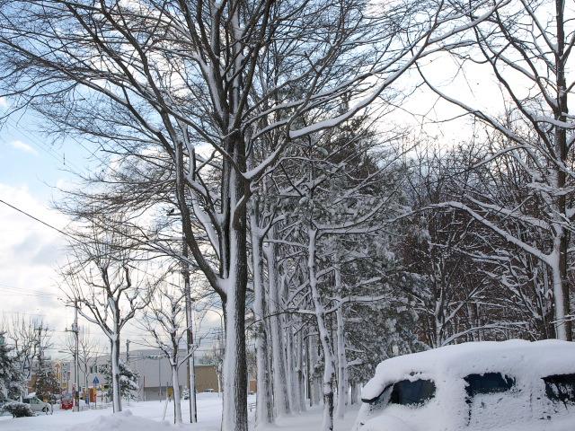 昨日の雪_d0153062_9373172.jpg