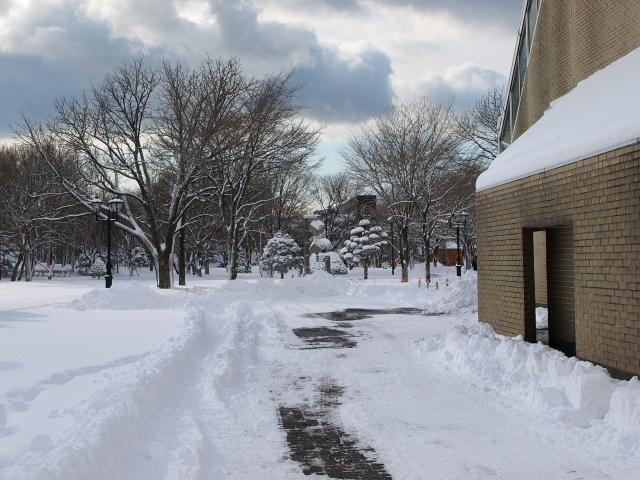 昨日の雪_d0153062_9374487.jpg