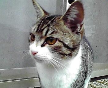 うちの美猫が・・・_f0074571_18231295.jpg