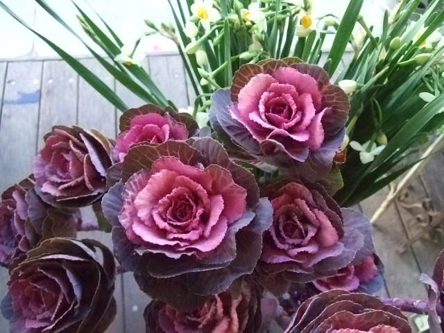 オークリーフ(お正月の花)_f0049672_171530.jpg