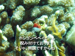 f0144385_19545635.jpg