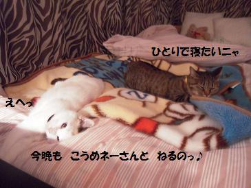 c0139488_23194636.jpg
