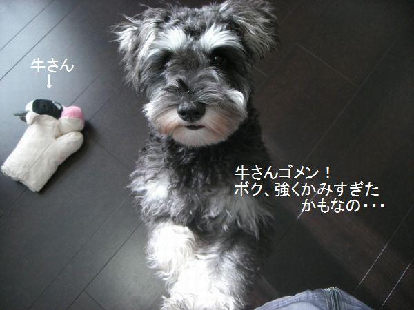 f0197317_22153388.jpg