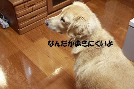 f0114128_19392424.jpg
