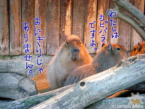ふくらカピバラ_f0138828_9465066.jpg